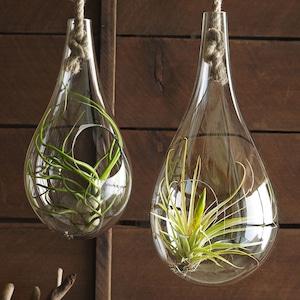 Sサイズ Roost Recycled Glass Bubble Hanging Terrarium ハンギングバブルテラリウム  スモール