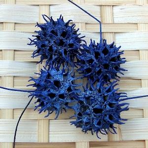 モミジバフウ ブルー 4個
