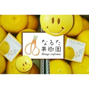 成田果樹園の文旦〔贈答用〕10kg