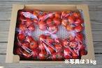 ご家庭用フルーツトマト約9kg☆お得な業務用箱入り<全国送料無料>