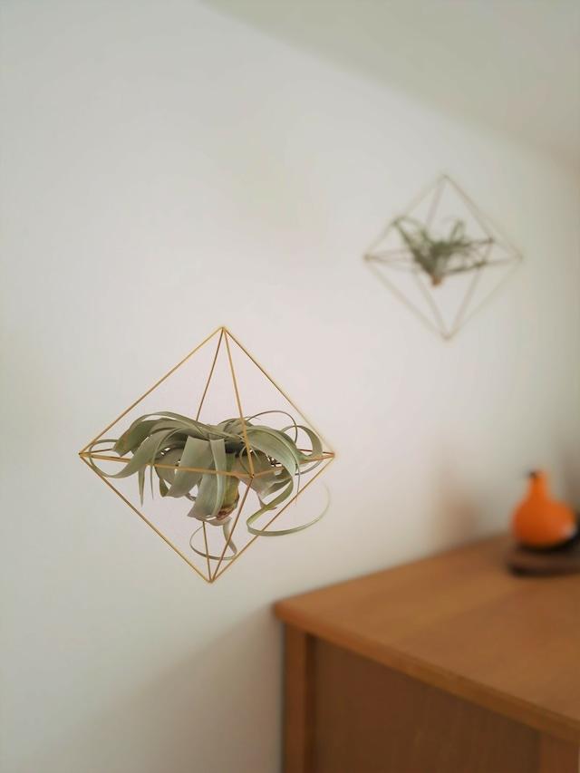 エアプランツをおしゃれに飾ろう!真鍮製エアプランツハンガー(六面体)吊り下げタイプ