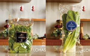 LOHASALA レタスミックス小分け 5個×100g+ロメイン株 5個 無洗LED栽培野菜