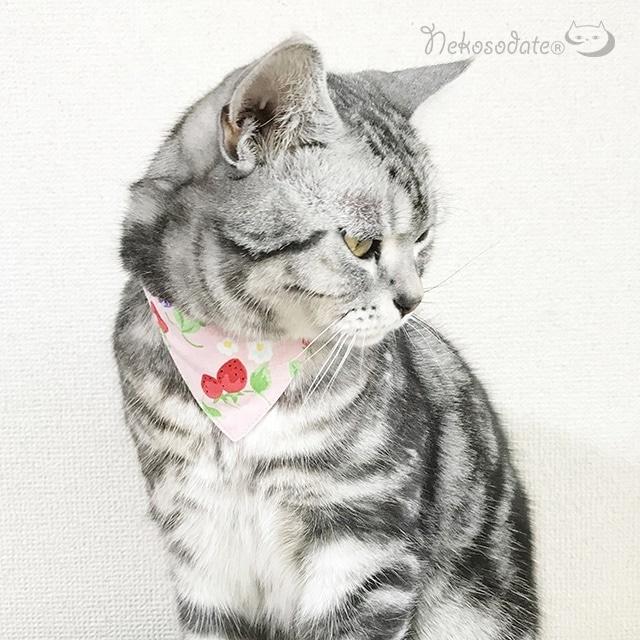 【ベリーベリー柄】猫用バンダナ風首輪/選べるアジャスター 猫首輪 安全首輪 子猫から成猫