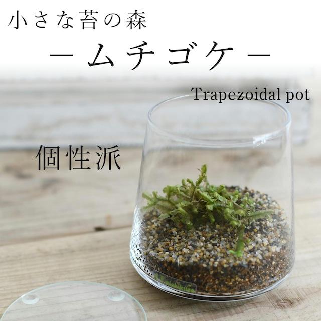小さな苔の森−ムチゴケ− 台形ポット◆個性派【苔テラリウム】