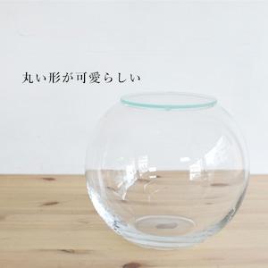 【ガラス容器】ラージボール・M ふた付き(200xh165mm)◆適度な通気で丈夫に育つ