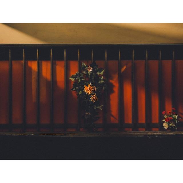 Night Order #34 / 立石呑んべ横丁