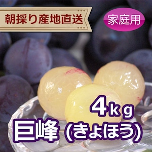 巨峰(きょほう) 4kg(家庭用ぶどう)