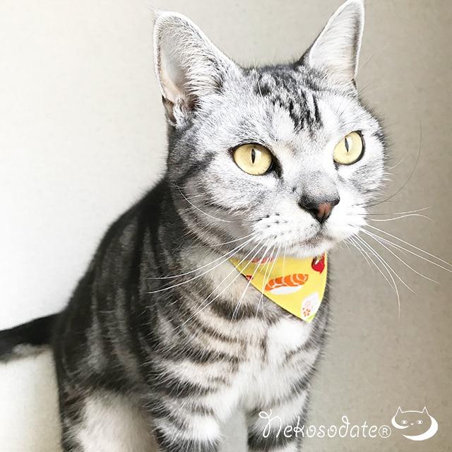 【寿司柄】猫用バンダナ風首輪/選べるアジャスター 猫首輪 安全首輪 子猫から成猫