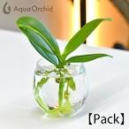 Aqua orchid 【パック】