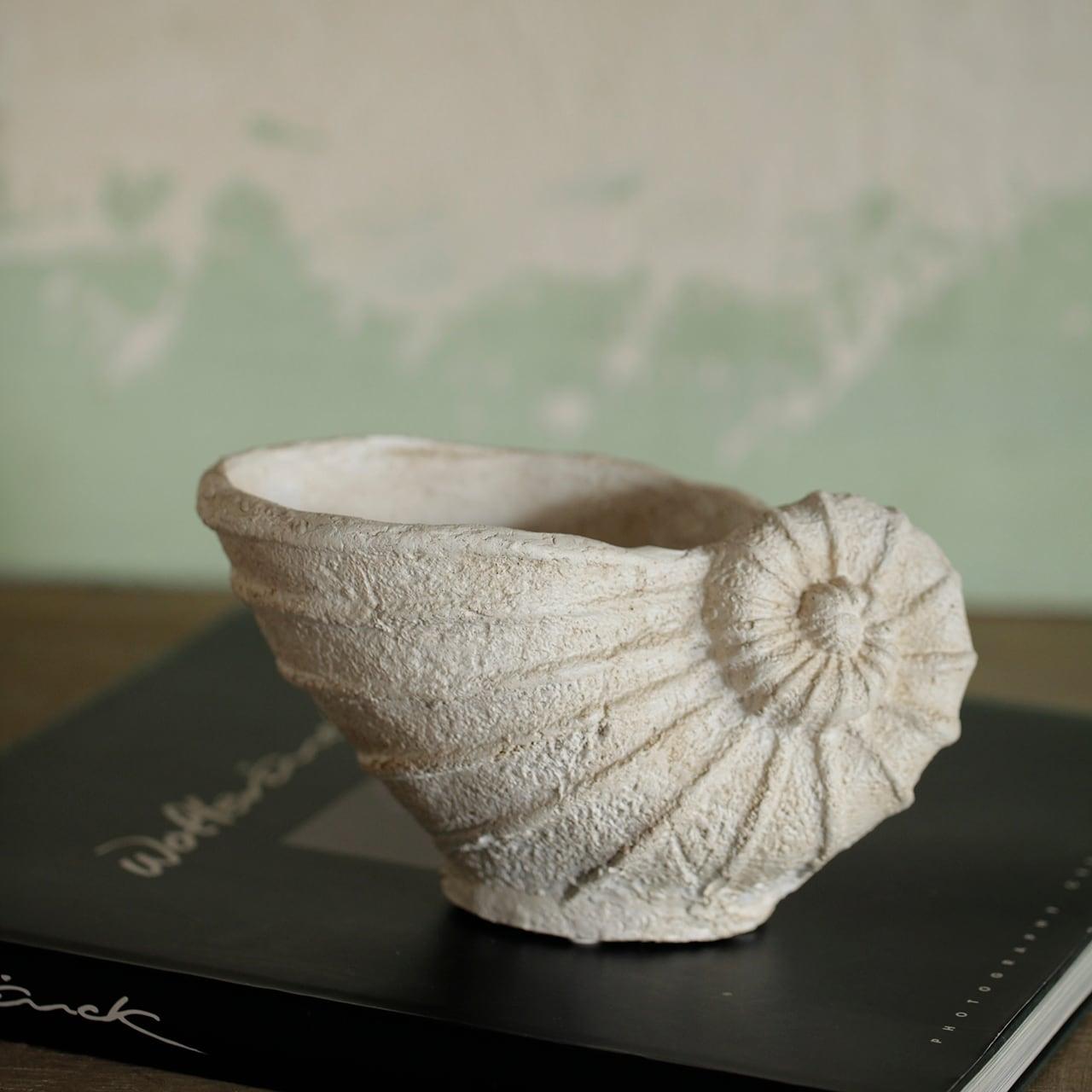 貝殻のベース
