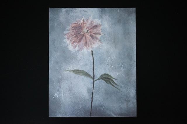 flower_ash rose