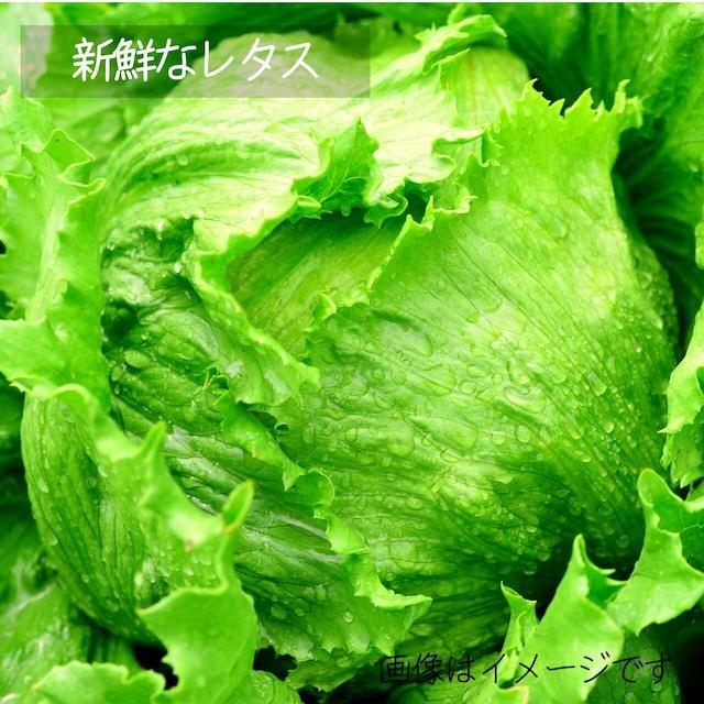 レタス 1個 : 朝採り直売野菜 7月の新鮮な夏野菜 7月10日発送予定