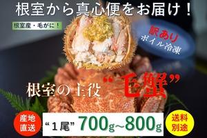 北海道根室産【堅蟹】活ボイル冷凍毛ガニ【総重量700g〜800g/尾】数量限定販売