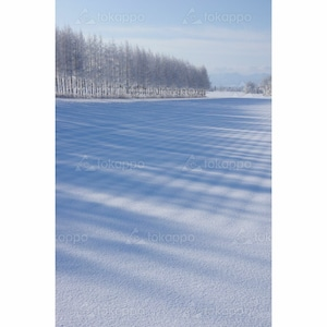 冬の防風林
