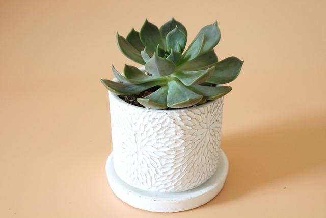 デザイン鉢の多肉植物
