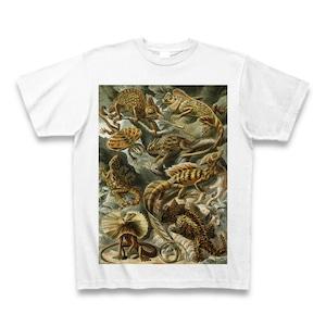 エルンスト・ヘッケル 超絶イラスト トカゲ Tシャツ -maylime- 【Ernst Haeckel】