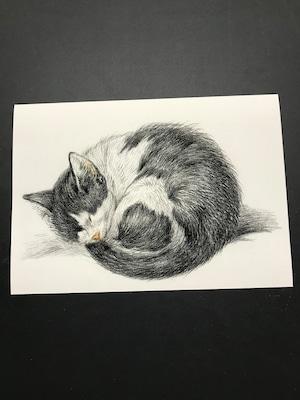 Rolled up lying sleeping cat by Jean Bernard  レプリカ