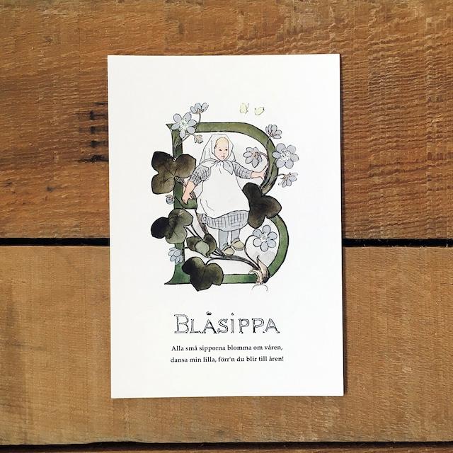 ポストカード「ミスミソウ@BLÅSIPPA(王子たちの花文字 - 2)」