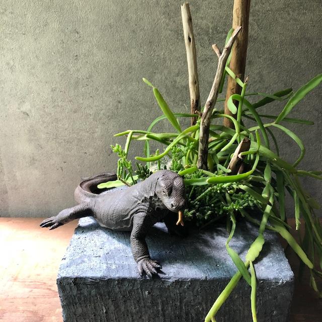 Komodo dragon コモドドラゴン