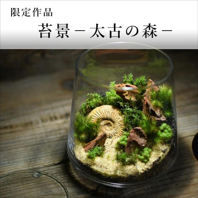 苔景-太古の森-【苔テラリウム・現物限定販売】2021.10.22#2