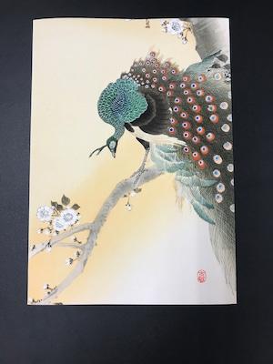 ビンテージプリント 桜の木と孔雀 小原古邨
