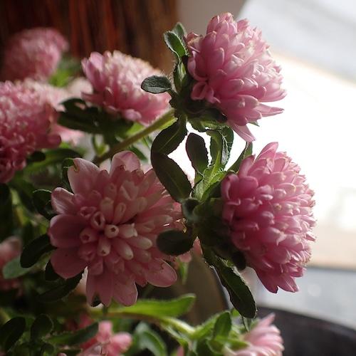 【pink flower】ポストカード