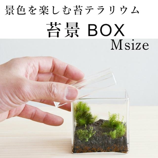 【景色を楽しむ苔テラリウム】苔景BOX Msize
