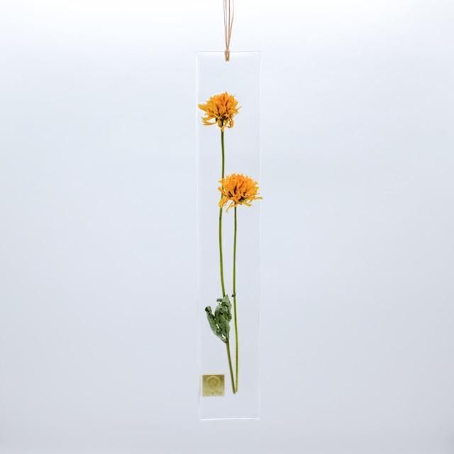 dried flower S ヒメヒマワリ