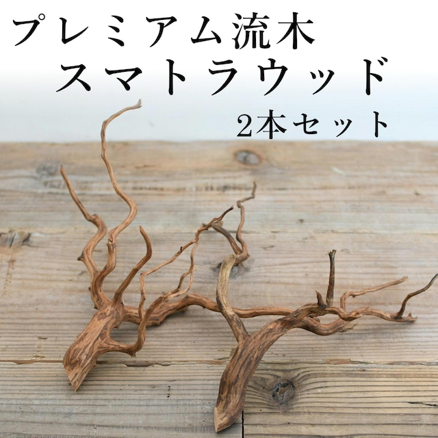 【滑らかな枝ぶり】テラリウム用プレミアム流木・スマトラウッド 2本セット◆形状お任せ