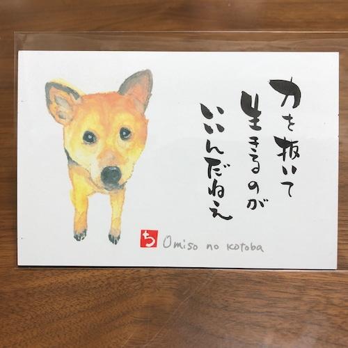 ポストカード 61(おみそ)