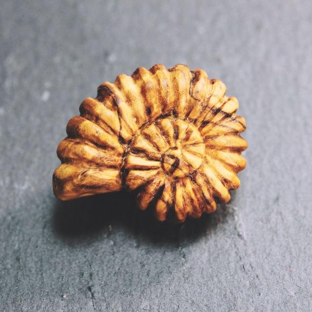 アンモナイト 木彫ブローチ〈樹種:オリーブウッド〉