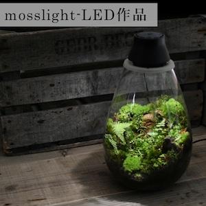 【現物販売・苔テラリウム】太古の森mosslight-LED