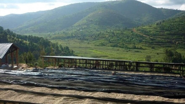 エチオピア グジ ジゲサ 100g