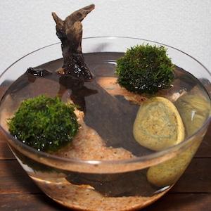 【めだか水産オリジナル】浮かぶ苔玉メダカ鉢セット
