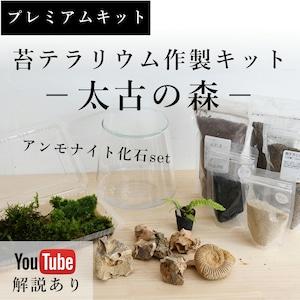 【プレミアムキット】苔テラリウム−太古の森−アンモナイト化石set ◆動画解説あり