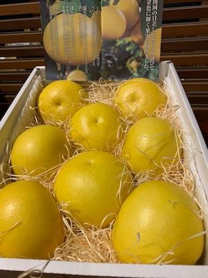 高知県産 土佐文旦(温室) 約5kg(7玉入)