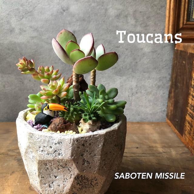 Toucan オオハシ mini