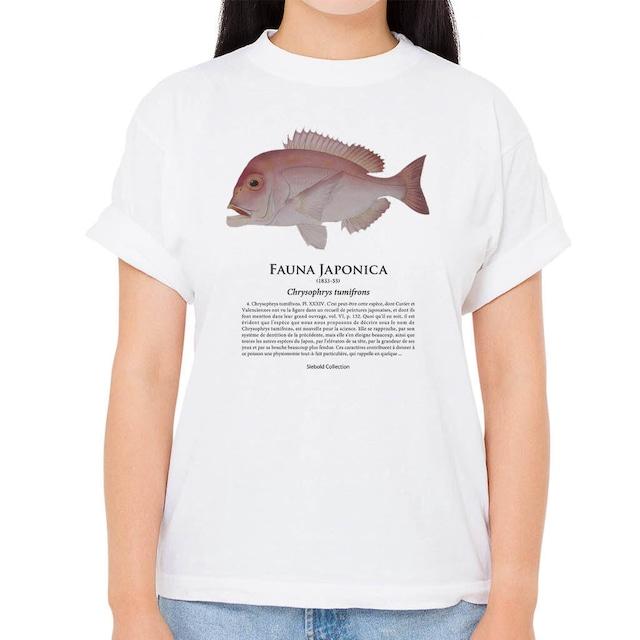 【キダイ】シーボルトコレクション魚譜Tシャツ(高解像・昇華プリント)