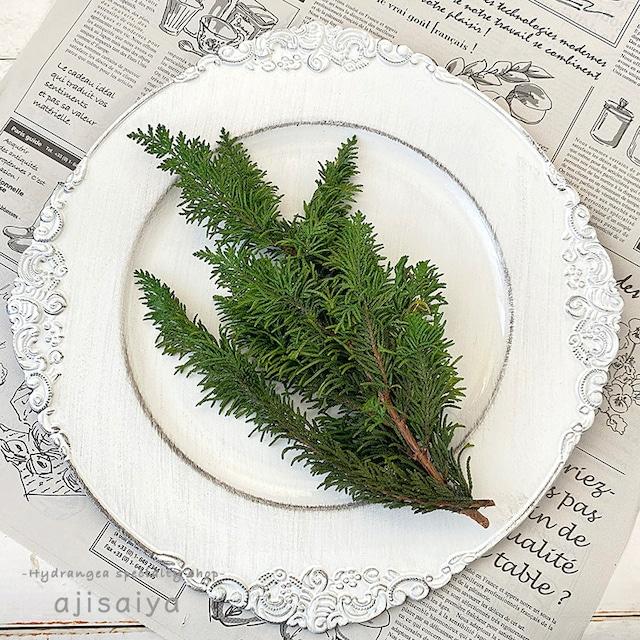 もりもり クジャクヒバ グリーン 【プリザーブドフラワー】 クリスマスの定番アイテム