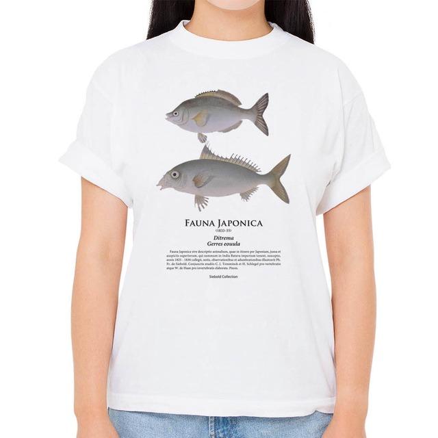 【ウミタナゴ・クロサギ】シーボルトコレクション魚譜Tシャツ(高解像・昇華プリント)
