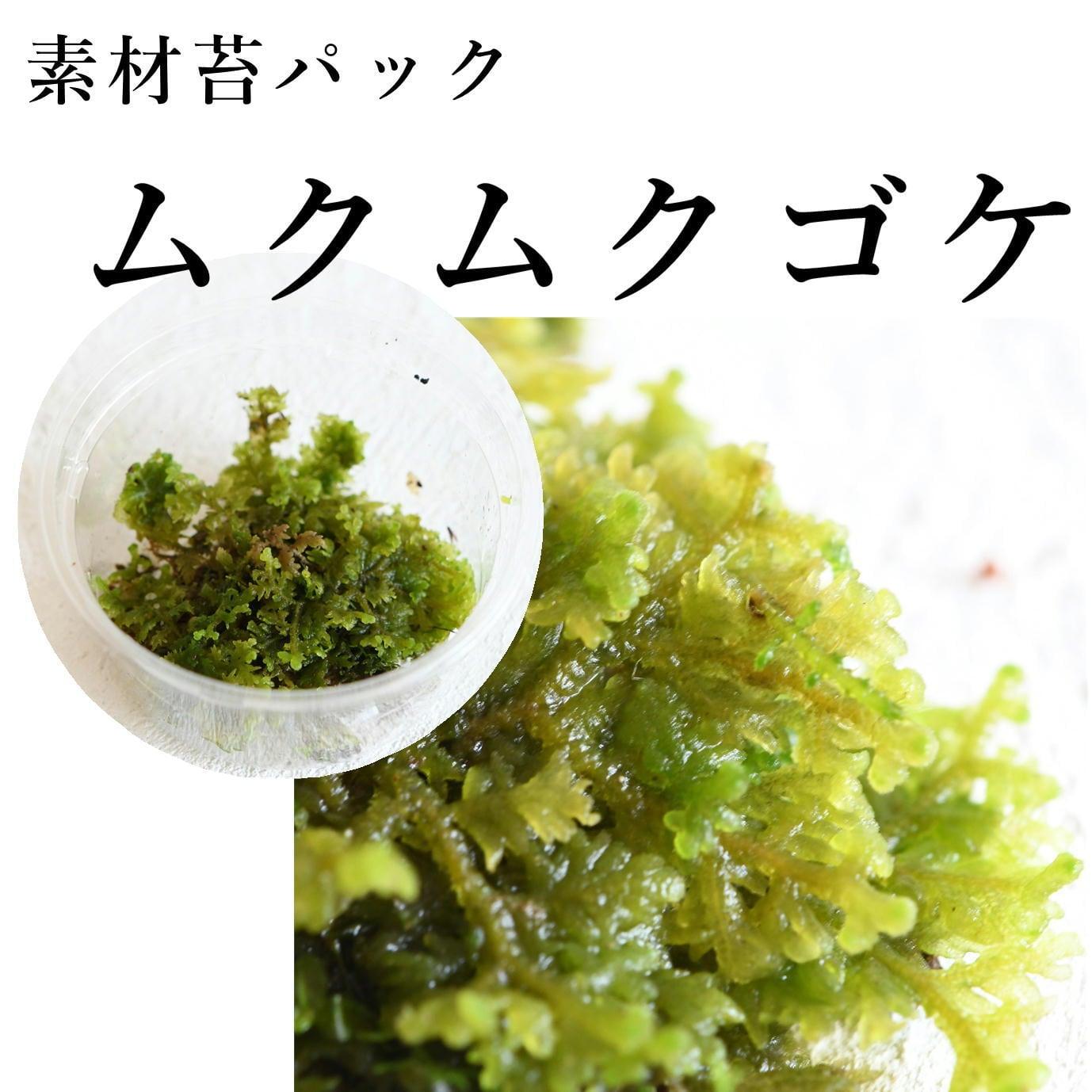 ムクムクゴケ 苔テラリウム作製用素材苔