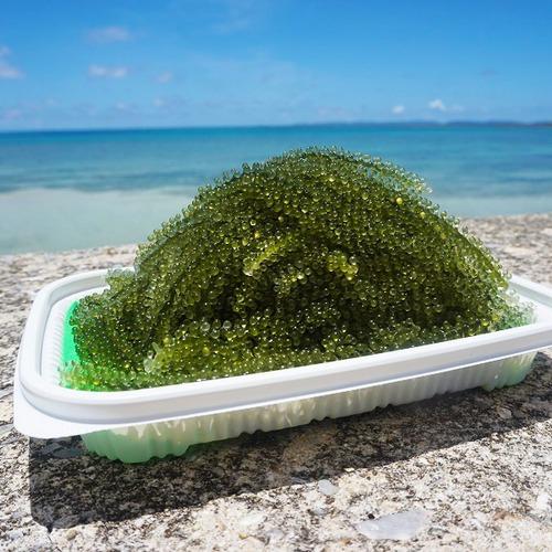 生。海ぶどう A品 60g×3パック