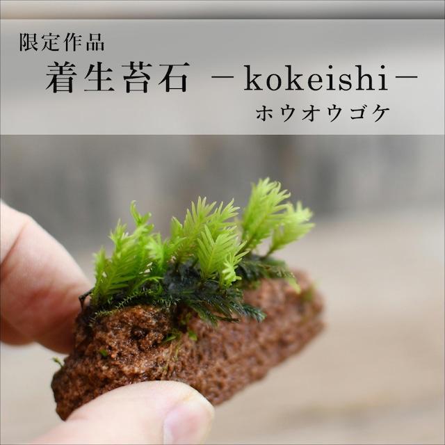 【現物販売】着生苔石ホウオウゴケ 2021.9.3#5◆栽培容器付