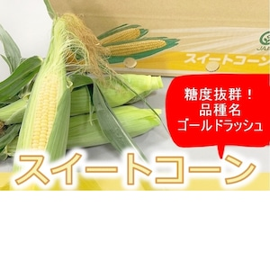 【期間限定】兵庫県産 朝採り!スイートコーン「ゴールドラッシュ」 約5kg 2L 14本入りJA兵庫南