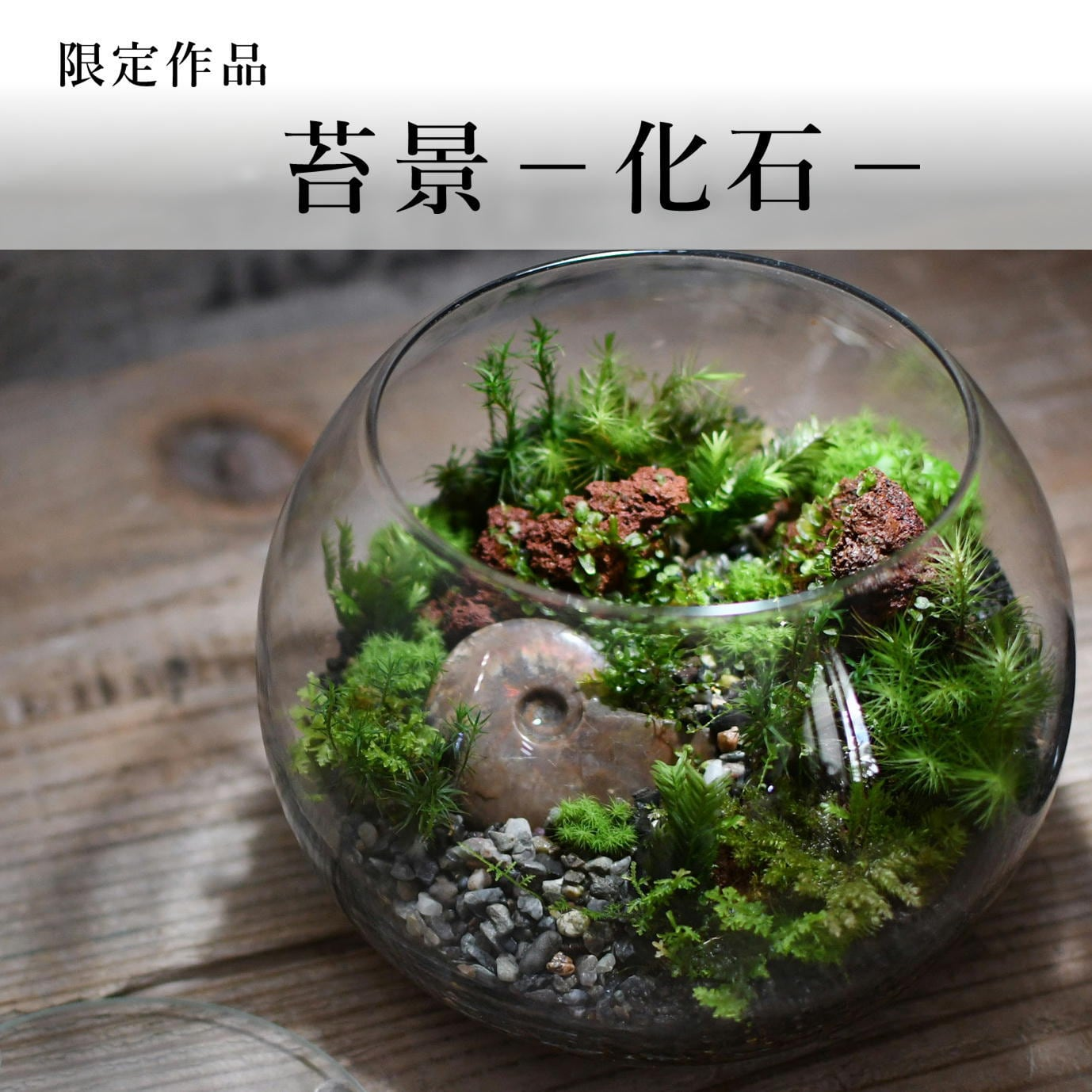 苔景−化石−2021.7.4#4【苔テラリウム・現物限定販売】