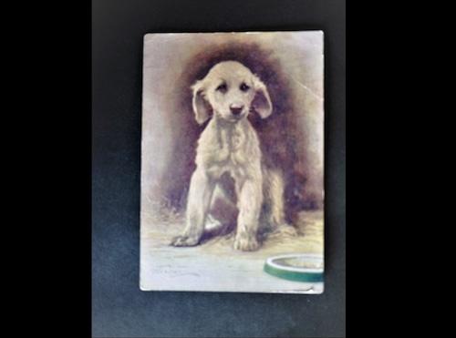 イギリス アンティークポストカード 犬の絵 絵葉書 The Afgan Hound アフガンハウンド