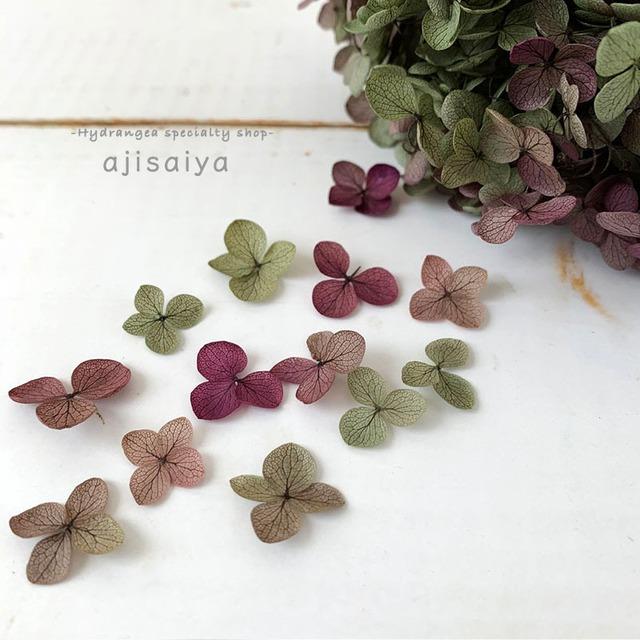 アナベル あじさい|グラデーション小さな花びら20枚