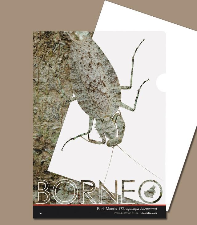 ボルネオ擬態クリアファイル キノハダカマキリ