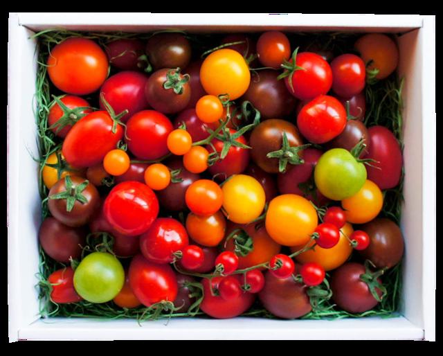 カラフルトマトの宝石箱☆約10種類のトマトの詰め合わせ
