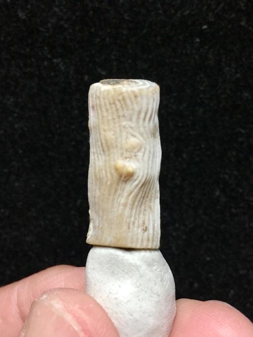 1) インドネシア産ウリ珊瑚原石